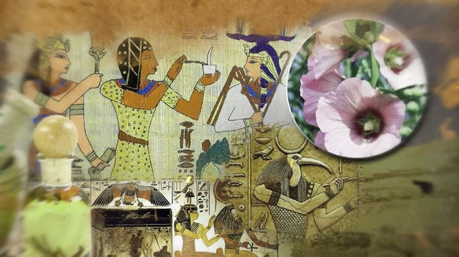 История создания маршмеллоу